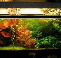 Освещение для аквариума с растениями
